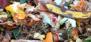 Food and Fruit Waste