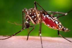Top 6 Best Mosquito Killer Machines in India (to Trap, Catch or Kill Mosquitos)